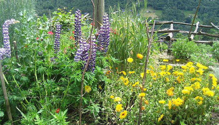 Garten Pila